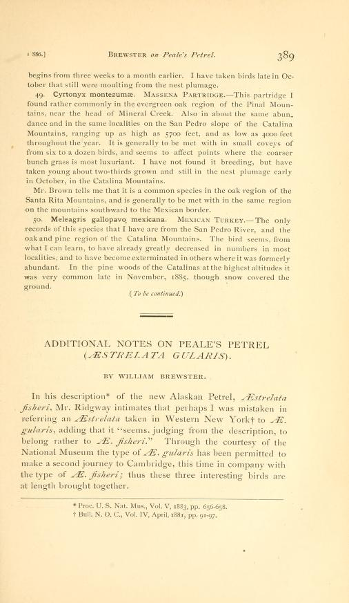 Additional Notes on Peale's Petrel (Aestrelata gularis)